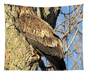 Perched Tapestry