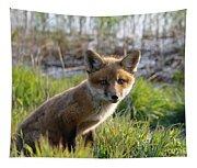 Red Fox Kit Tapestry