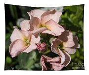 Single Peach Stocks From The Vintage Mix Tapestry