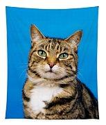 Tabby Cat Tapestry