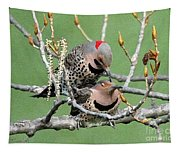 Yellow-shafted Northern Flickers Tapestry