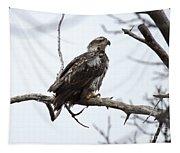 Bald Eagle Tapestry