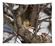 American Goldfinch In Winter Tapestry