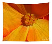 Begonia Named Nonstop Apricot Tapestry