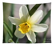 Cyclamineus Daffodil Named Jack Snipe Tapestry