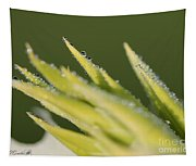 Dwarf Canna Lily Named Ermine Tapestry