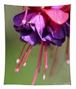 Fuchsia Named Dark Eyes Tapestry