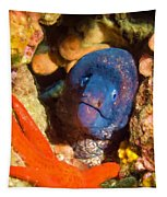 Moray Eel With Starfish Tapestry