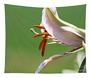 Oriental Lily Named Tiger Edition Tapestry