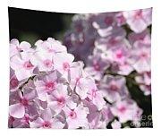 Phlox Paniculata Named Bright Eyes Tapestry