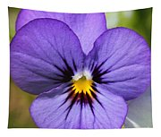 Viola Named Sorbet Blue Heaven Jump-up Tapestry