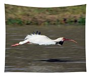 White Ibis In Flight Tapestry