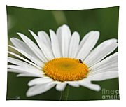 Wildflower Named Oxeye Daisy Tapestry