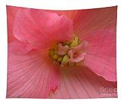 Begonia Named Nonstop Pink Tapestry