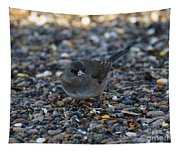 Dark Eyed Junco Tapestry