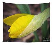 Dwarf Cyclamineus Daffodil Named Jet Fire Tapestry