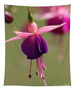 Fuchsia Named Lambada Tapestry