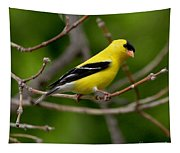 Gold Finch Tapestry
