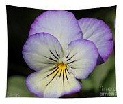 Viola Named Sorbet Lemon Blueberry Swirl Tapestry