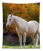 White Horse In Autumn Tapestry