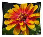 Zinnia Named Swizzle Scarlet And Yellow Tapestry