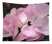 Zonal Geranium Named Tango Light Orchid Tapestry