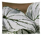 Caladium Named White Christmas Tapestry