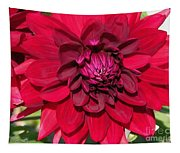Dahlia Named Nuit D'ete Tapestry