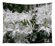 Dianthus Superbus - White Tapestry