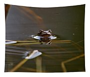 European Common Brown Frog Tapestry