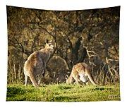 Kangaroo Tapestry