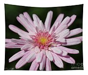 Marguerite Daisy Named Double Pink Tapestry