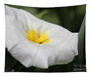 Morning Glory Named White Ensign Tapestry