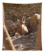Nubian Ibex Tapestry
