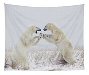Polar Bears Play Fighting Along The Tapestry