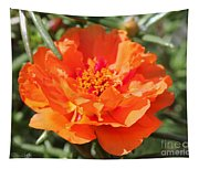 Portulaca Named Sundial Tangerine Tapestry