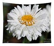 Shasta Daisy Named Paladin Tapestry
