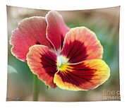 Viola Named Penny Red Blotch Tapestry