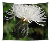 Centaurea Named The Bride Tapestry