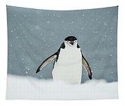 Chinstrap Penguin  Pygoscelis Tapestry