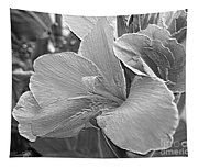 Dwarf Canna Lily Named Corsica Tapestry