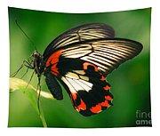 A Beauty Tapestry