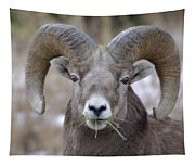 A Big Ram Caught With His Mouth Full Tapestry