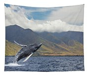 A Breaching Humpback Whale  Megaptera Tapestry