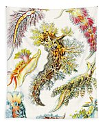 A Collection Of Nudibranchia Tapestry