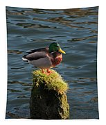 A Drake Mallard Perches On A Piling Tapestry