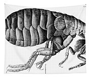 A Flea From Microscope Observation Tapestry