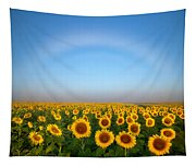 A Fog Bow Over The Colorado Sunflower Fields Tapestry