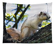 A Fox Squirrel Poses Tapestry