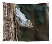 A Grey Squirrel Making It S Way Tapestry